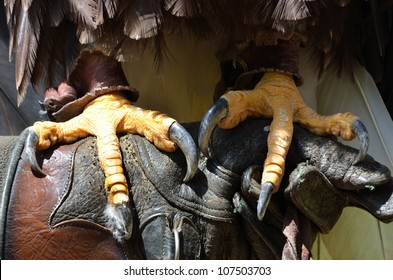 Close up of eagle talons