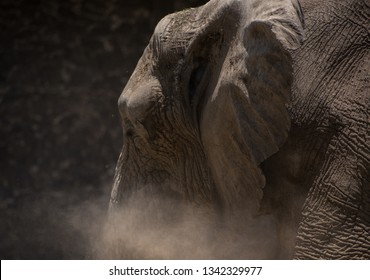 close up of an elephant walking away with some dust in front