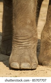 Close up of an elephants paw