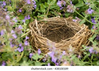 Close up empty birds nest / Selective focus