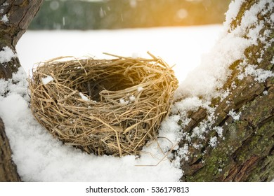 Close up empty birdsnest on white snow background / Selective focus