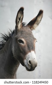 a close encounter with an ass donkey