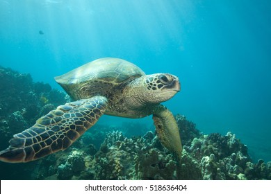 Close encounter with a green sea turtle underwater