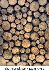 Close up of the ends of a group of stacked cut wood