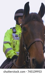 Close up of English Police Horse C, Police Officer on Horse Blured and Out of Focus, Shallow Depth of Field Split Toning Vertical Photography