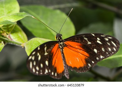 a close up of an exotic butterfly