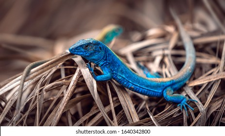 close up of exotic rainbow lizards