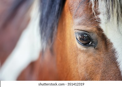 Close up eye of the big brown horse