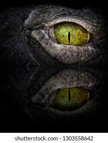 Close up eye of a crocodile, reflected in water. Scary green eye.