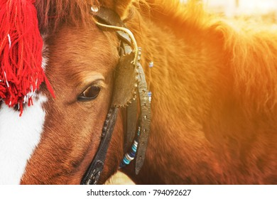 Close up of the eye of a harnessed brown horse with a red head decoration attached to its bridle looking at the camera conceptual of a special event or tours for tourists with golden glow from the sun