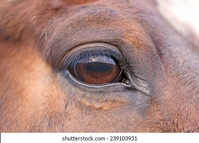 Close up eye of the horse