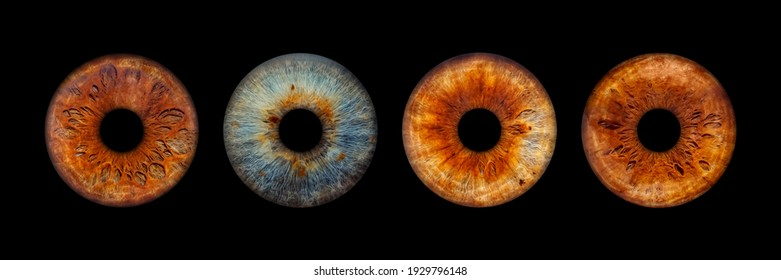 Close up of eye iris on black background, macro, photography