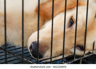 Close up face and eyes a dog in shelter locked behind mesh