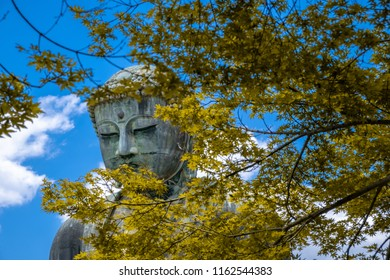 Close up face the Great Buddha of Kamakura at autumn season with yellow leaf, Kanagawa,Japan. Originally housed in a hall that was destroyed twice in the 14th Century, the great Buddha at Kotoku-in Te