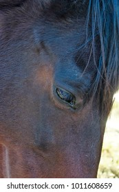 Close up of the face of a horse