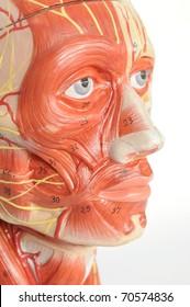close up to face human model