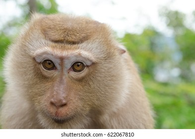 close up face of monkey in nature, shallow depth of field