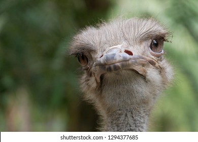 A close up face ostrich close up face.
