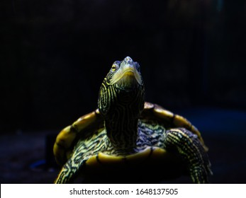 close-face-turtle-through-glass-260nw-16