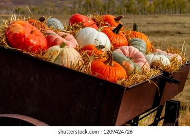 Close up of  fall display of variety of different colored pumpkins arranged in straw sitting in old farm equipment