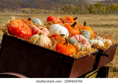 Close up of  fall display of variety of different colored pumpkins arranged in straw sitting in old farm equipment on mountain ranch road