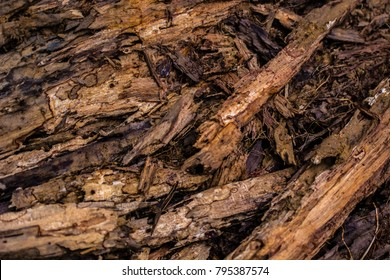 Close up of a fallen and decaying old branch on the forest floor. Haphazard yet intricate and beautiful patterns in nature.