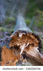 Close up of fallen tree decomposing in wilderness area