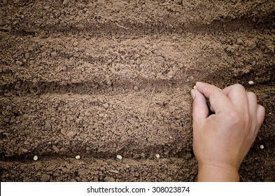 Close up farmer hand sawing seed on back soil with sunlight background in morning time