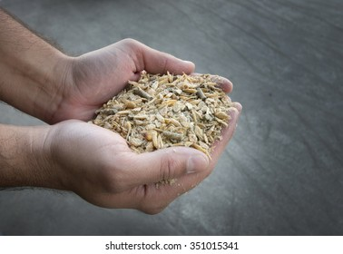Close up of farmer's hand holding compound cattle feed in palms