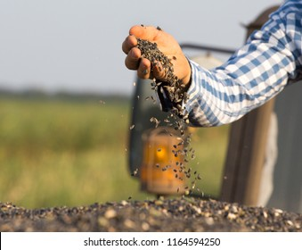 Close up of farmer's hand holding sunflower seeds in full trailer