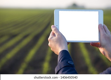 Close up of farmer's hands holding tablet in front of corn field in spring