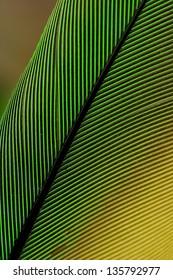 Close up Feather Parrot - Aratinga leucophthalma -