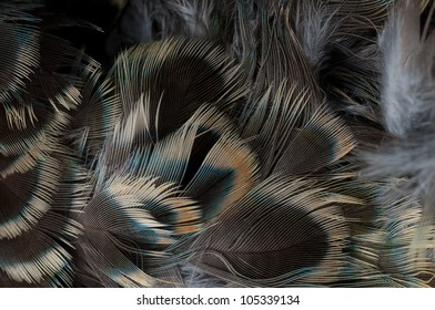 Close up feathers