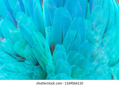 Close up feathers of blue and green macaw parrot bird pattern texture background