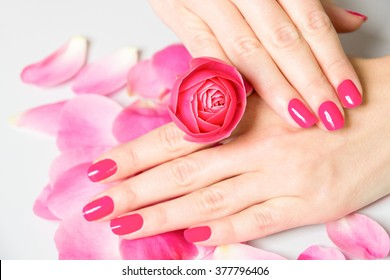 Close Up of Female Hands Wearing Bright Pink Polish on Nails and Holding Small Rose with Scattered Rose Petals on White Surface in Background - Spa Manicure Detail