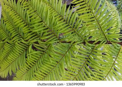 A close up of a fern leave; in Dusun Bambu, Lembang, Bandung, West Java, Indonesia.