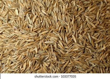 Close up of fescue grass seed