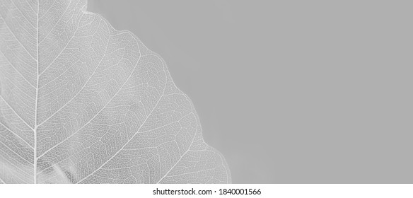 Close up of Fiber structure of dry leaves texture background. Cell patterns of Skeletons leaves, foliage branches, Leaf veins abstract of Autumn background for creative banner design or greeting card