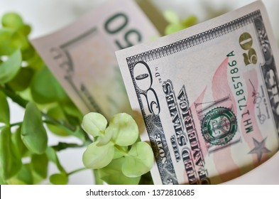 Close Up of Fifty Dollar Bills with Green Leaves