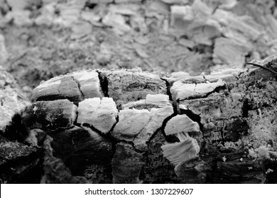 close up of The fire is gone Left ashes and stumps burn,Coals in an extinct fire.black and white picture
