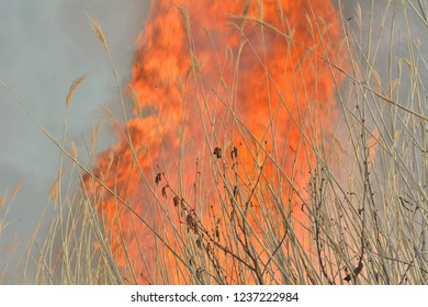A close up of the flame of brushfire in reed.