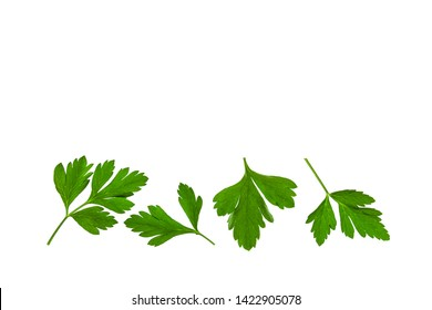close up of flat leaf parsley leaves on white background with copy space above
