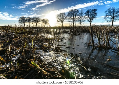 Close up of a flooded agriculture stubble field in the netherlands with backlight and frozen ice elements