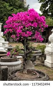 Close up flower arrangement in garden