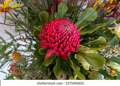 Close up of flower arrangement with red waratah flower with green leaves. Australian native flower, telopea
