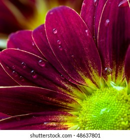Close up of flower petals with water drops