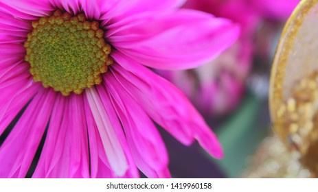 Close Up Of Flowers With Pink And Magenta Petals