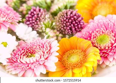 Close up of flowers, studio shot