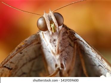 Close up fluffy moth with orange background