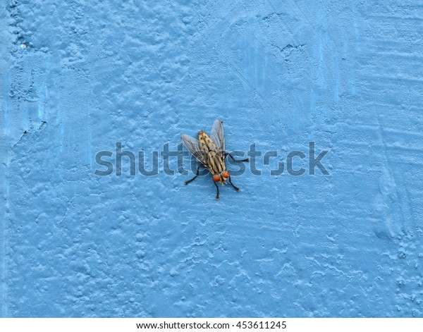 Close up of fly on blue cement wall
